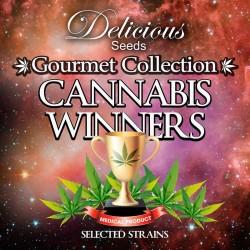 CANNABIS WINNER Gourmet...